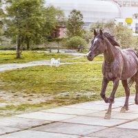 конь, :: Lidiya Gaskarova