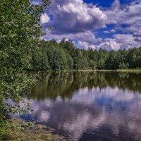 Подмосковный июнь :: Андрей Дворников