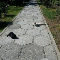 Если чёрный кот и белый кот дорогу перейдёт... :: Наталья Владимировна