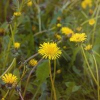 Цветы :: константин Меркулов
