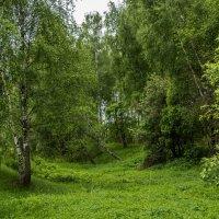 Подмосковный лес. :: Владимир Безбородов