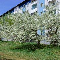 Весенний цвет :: Владимир Гришин
