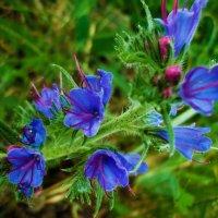 Лесной цветок :: Виктория Власова
