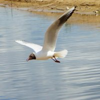 Чайка :: Юлия Фотограф