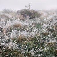 Островок туманного утра....2 :: Андрей Войцехов