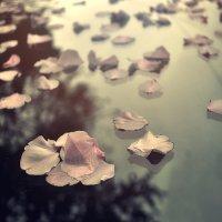 ...уронила радуга улыбаясь цвет,подобрала сакура ласковый привет... :: Лилия .