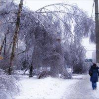 После ледяного дождя :: Анна Воробьева