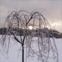В саду снежной королевы :: Анна Воробьева