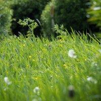 Просто трава с кустами :: Юрий Плеханов