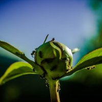 муравьишки :: Olesia Dildina