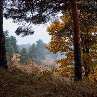 Осенний лес :: Сергей Кокотчиков