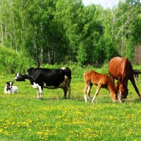 Ходят кони да коровы :: Наталья Петровна Власова