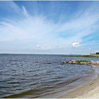 Берег Калининградского залива. :: Валерия Комова