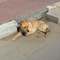 Пять минут из жизни бездомного пса... :: Наталья Денисова