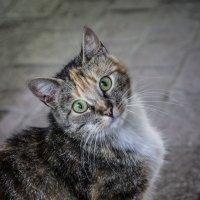 Кошка :: Elena Ignatova