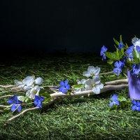 Майские цветы :: Ольга Дядченко