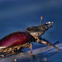 Немного про жука и свет заката... :: Александр Резуненко