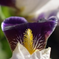 Цветы :: Женя Лузгин