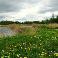 Природа в мае (перед дождём) :: Милешкин Владимир Алексеевич