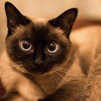 Удивлённый взгляд кошки :: Valentina Zaytseva