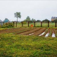 Зона неуверенного земледелия... :: Александр Никитинский