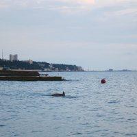 Дельфин на рыбалке :: valeriy khlopunov