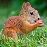 дружба за орешки :: StudioRAK Ragozin Alexey