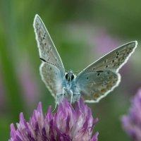 Бабочка :: Olga Golub