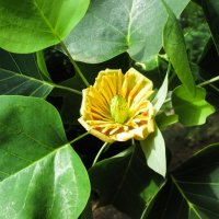 В ботаническом саду! :: Larisa Pachkova