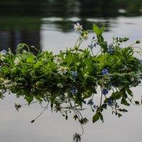 венок на воде :: Ольга (Кошкотень) Медведева