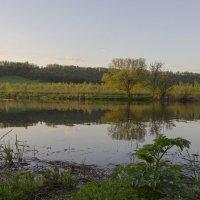 Вечером у реки. :: Инна Щелокова