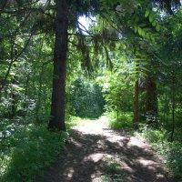 Лесными тропами :: Валерий Самородов