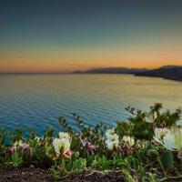 Цветочный закат :: Евгений Зинченко