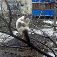 кошка :: Горкун Ольга Николаевна