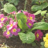 весенние цветы :: Надежда Сальянова