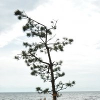 Дюны море :: елена