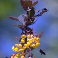 муха и пчёлка :: Валерий Самородов