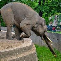 Слонам тоже нужны витамины! :: Valentina M.