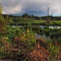 Рыболовные и грибные места... :: Александр Попов