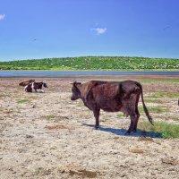 Летний полдень на берегу Днестра. :: Вахтанг Хантадзе