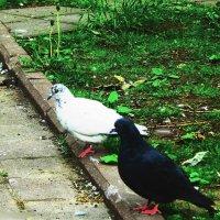голуби в сквере :: Павел Нарышкин