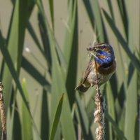 А бабочка крылышками бяк-бяк-бяк :: Сергей Цветков
