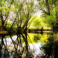 Деревенский пруд.............. :: Александр Селезнев