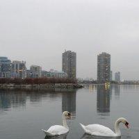 Вечер, лёгкий туман на оз. Онтарио (Канада) :: Юрий Поляков
