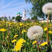 Солнечное лето, возле Толгского монастыря :: Николай Белавин