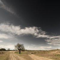 Дерево на развилке двух песчанных дорог :: Александр