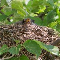 Вдруг на яблоне у соседа по даче...  Событие/репортаж :: Елена Ахромеева