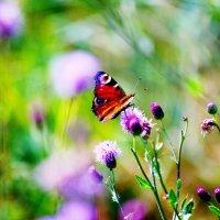 бабочка :: Георгий Никонов