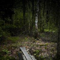 Мостик в лесу :: Евгений