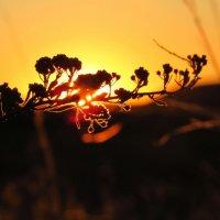 Закатное солнце :: Анна Гурина